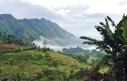 Morning View at Kiangan Rice Terraces royalty free stock image