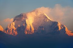 Morning view of Mount Dhaulagiri from Poon Hill. Morning panoramic view of Mount Dhaulagiri from Poon Hill view point, Nepal Himalayas mountains royalty free stock photo