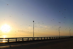 Morning view with seagulls from silhouetted bridge at Bangpu, Thailand Royalty Free Stock Image
