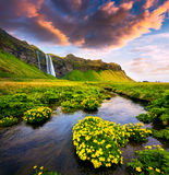 Morning view of Seljalandfoss Waterfall on Seljalandsa river in. Summer. Colorful sunrise in Iceland, Europe. Artistic style post processed photo Royalty Free Stock Images