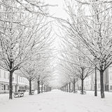 Snow tree on Kampa island, Prague Royalty Free Stock Photo