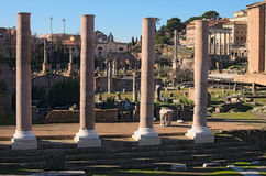 Morning view to Roman Forum. Ancient ruins and columns. Rome, Italy Stock Images