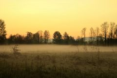 Morning View trees. Scenic view of a morning foggy sunrise Royalty Free Stock Photo