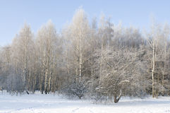 Morning view on winter forest Stock Photography