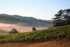 Morning Vineyard. Early morning fog in a vineyard and hills Royalty Free Stock Photo