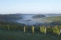 Morning Vineyard. View of a vineyard in the morning hours stock photo