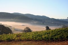 Morning Vineyards. Early morning fog in vineyards and hills stock photography