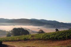 Morning Vineyards. Early morning fog in vineyards and hills Royalty Free Stock Images