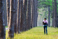 Morning walk. A woman enjoys her morning stroll in a pine forest Stock Images