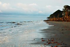 Morning walk on the beach. A person walking on the beach at sunrise Royalty Free Stock Image