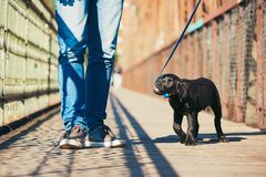 Morning walk with dog Royalty Free Stock Photography