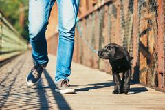 Morning walk with dog Royalty Free Stock Photos