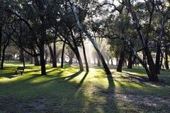 Morning walk Royalty Free Stock Photography