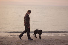 Morning walk of man an dog. Young caucasian male walking with dog on the morning beach, sunset on the sea or ocean and man with black labrador puppy Stock Images