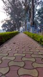 Morning Walk. A tiled road in an Indian Park Stock Image