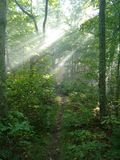 Morning Walk in the Woods Royalty Free Stock Photo