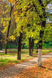 Morning walks in autumn park Stock Photo