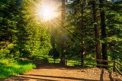 Morning walks at sunset Stock Photos
