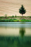 Morning water reflection of tree. Lonely tree near field. Morning water reflection of tree. Lonely tree near countryside field. Typical summer season Royalty Free Stock Photos