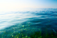 Morning water of sea Royalty Free Stock Image