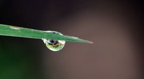 Morning waterdrops on a grass leaves Stock Photo