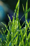 Morning Waterdrops Royalty Free Stock Photography
