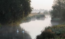 Morning on waterway with swans Stock Photo