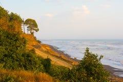 Morning wavy sea and trees on seashore Royalty Free Stock Image