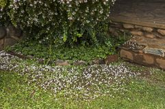Morning wet garden after rainy night in Sabie stock image