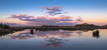 Morning wetlands panorama Royalty Free Stock Photography