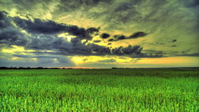 Morning In A Wheat Field. HDR Time Lapse stock video