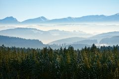 Morning winter calm mountain landscape. With coniferous forest Royalty Free Stock Photo