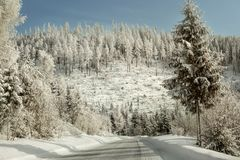 Morning on winter forest road, trees covered with white frozen s. Now glittering in sunlight Stock Photos
