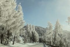 Morning on winter forest road, trees on the side lit by sun, covered by white rime frost. royalty free stock image
