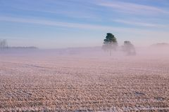 Morning winter landscape. Snow trees and frosty fog on the field. Royalty Free Stock Photo