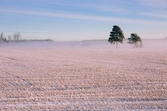 Morning winter landscape. Snow trees and frosty fog on the field. Royalty Free Stock Images