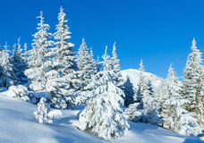 Morning winter mountain landscape Royalty Free Stock Photography