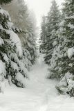 Winter mountain path amongst snow-covered trees Stock Photos