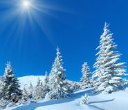 Morning winter mountain sunshiny landscape. With fir trees on slope Royalty Free Stock Image