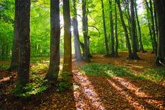 Morning wood Stock Image