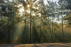 Morning wood Royalty Free Stock Photos