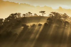 Morning in the wood. The sun ray through a pine forest at Dalat, Vietnam. The city is very wellknown for the cool and misty weather stock photo