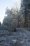 Morning woodcutted forest. Early morning I went to frosted forest and I have seen this beautiful word. It is in Hungary near to Kecskemet in this December 2012 Royalty Free Stock Image