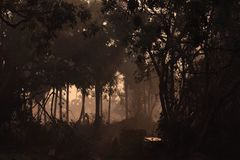 Morning woods Royalty Free Stock Photos