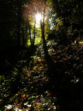 Morning Woods Stock Photography