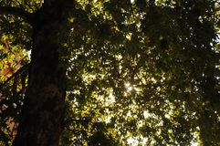 Morning& x27;s Sunshine between Bristol& x27;s Tree Stock Photography