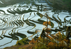 Morning of YuanYang Rice Terrace Stock Image