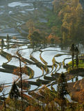 Morning of YuanYang Rice Terrace. Yuanyang County is a county of YunNan province, China. It is home to the most spectacular terraced rice fields in the world Royalty Free Stock Images