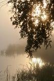 Morning1 brumeux Photos libres de droits