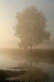Morning2 nebbioso Fotografia Stock